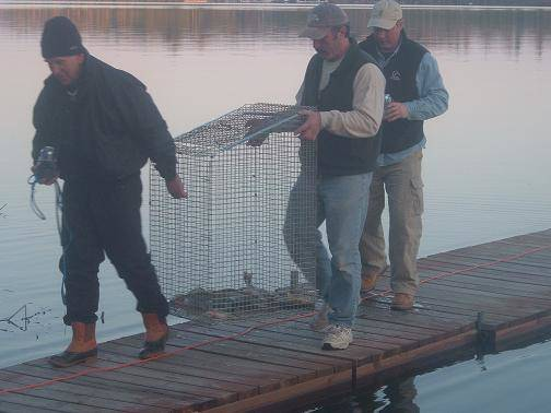 Men carrying fish in livewell cage at Lake Vermilion