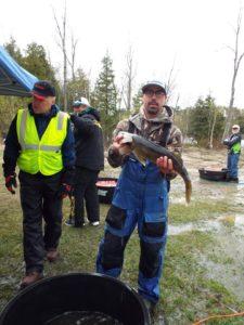 Shane Holman 26.5 Lake Vermilion walleye