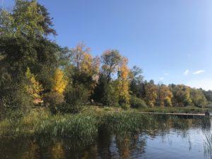 Tree line on Lake Vermilion shore
